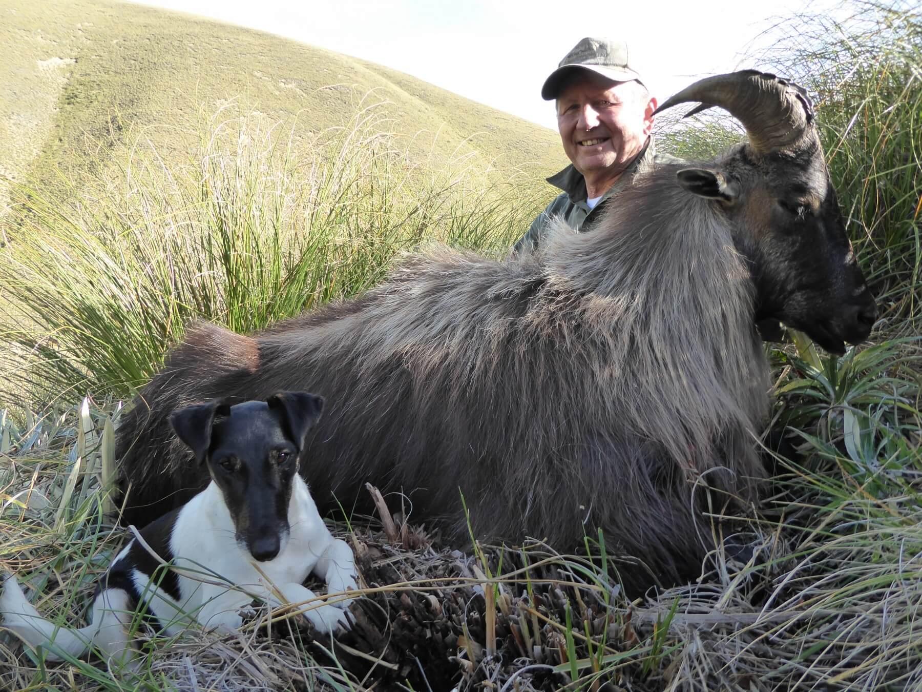 free range on foot bull tahr trophy new zealand
