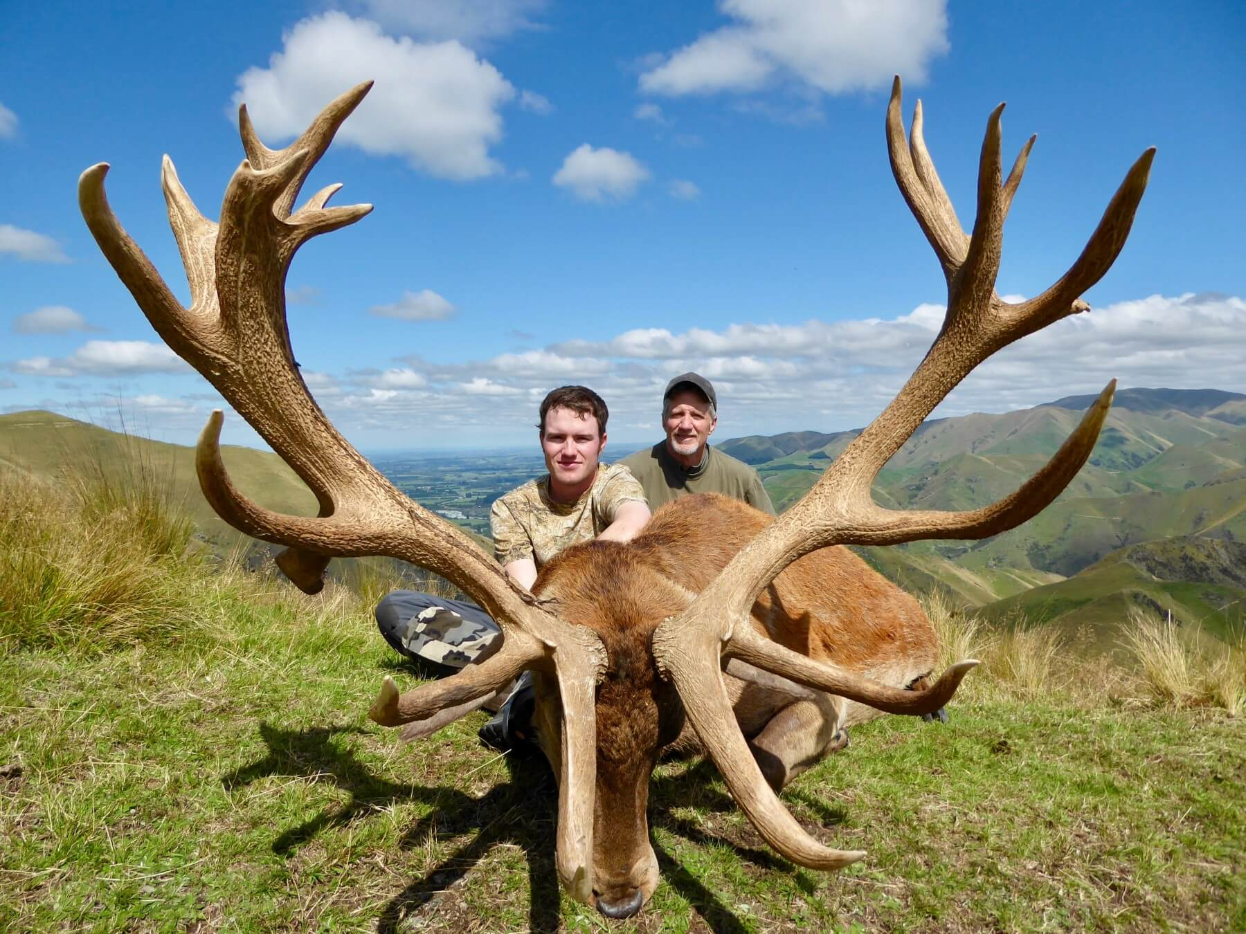 367 inch New Zealand Red Stag