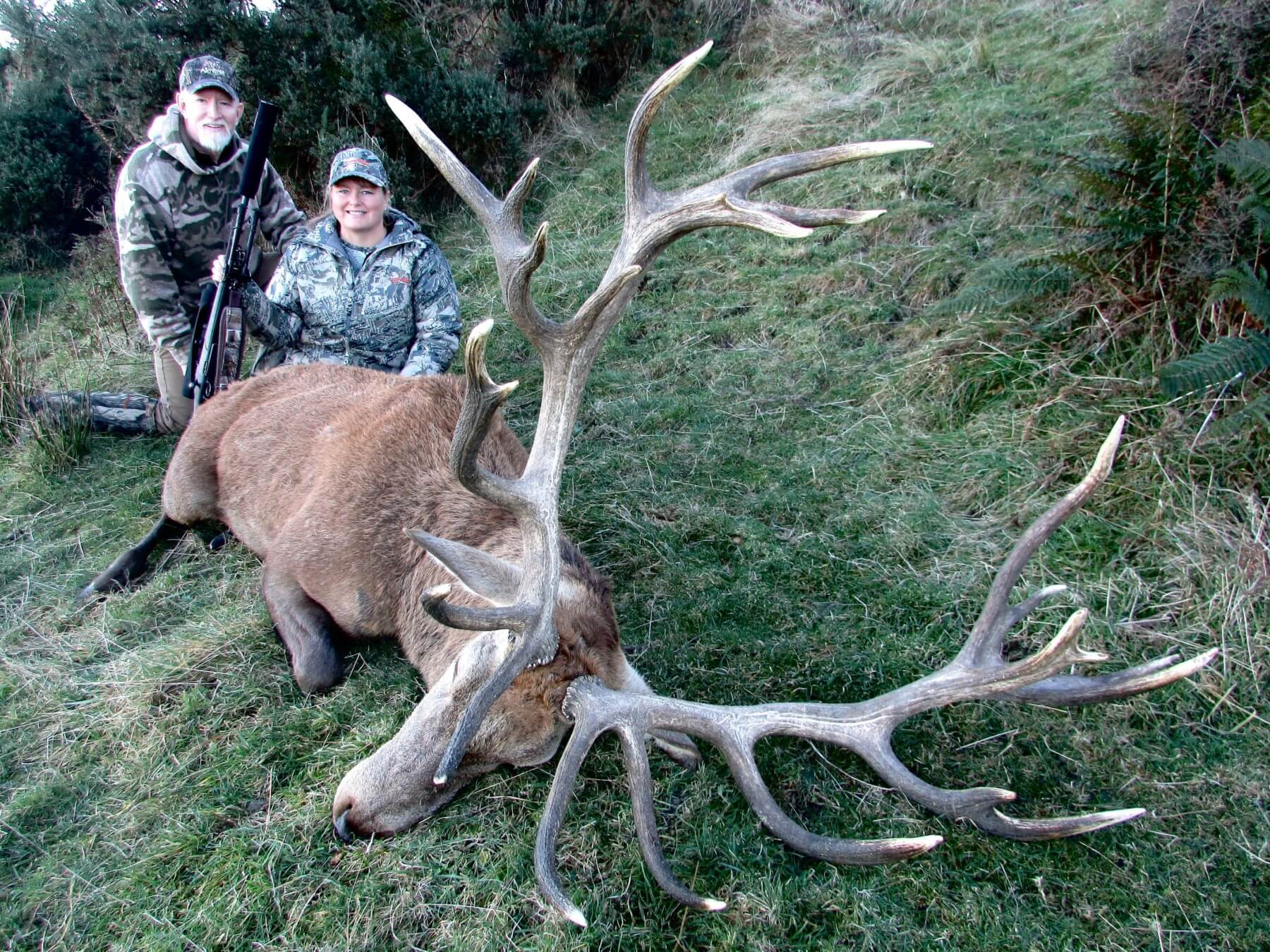 409 inch Red Stag
