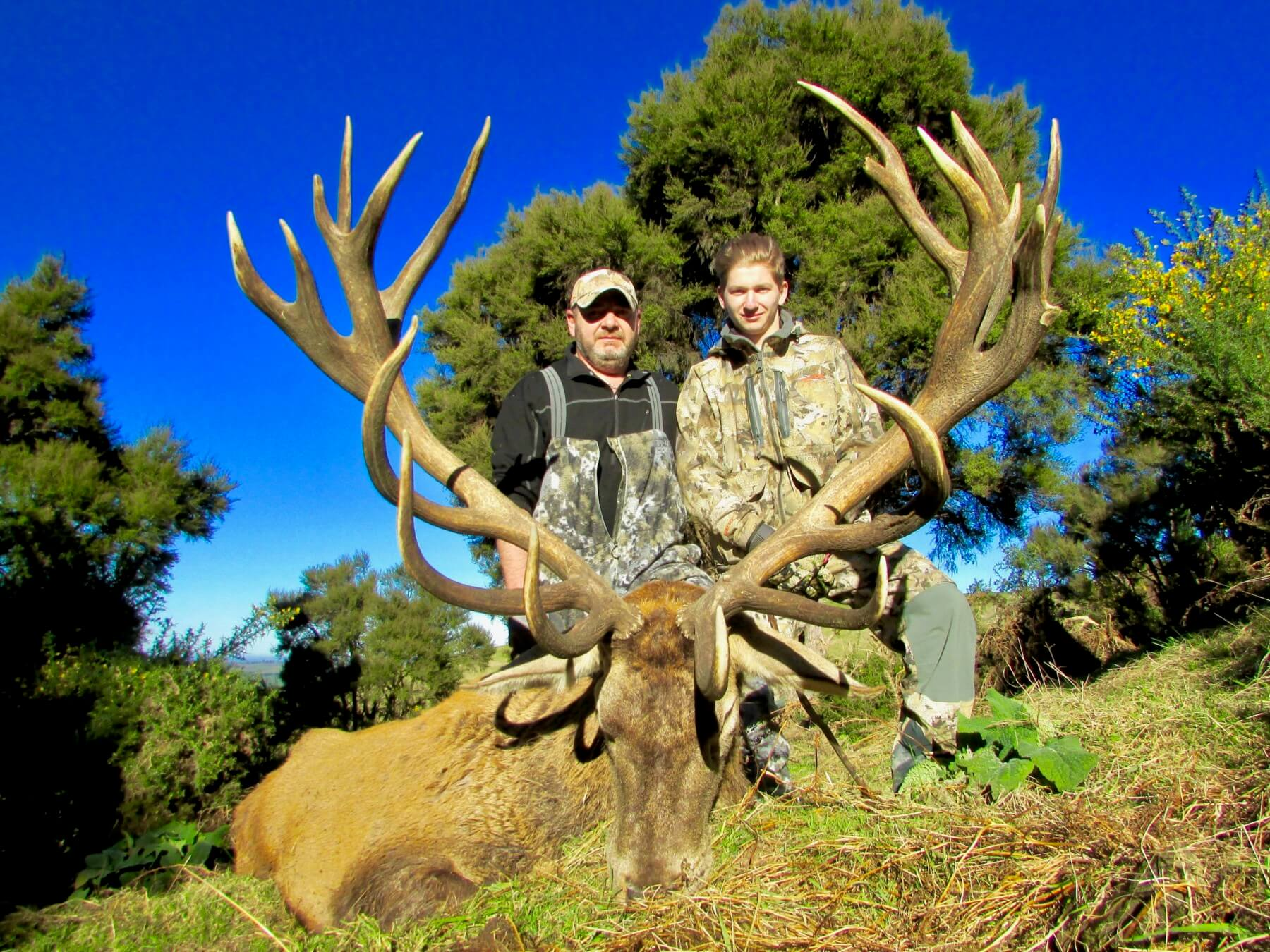 410 inch red Stag