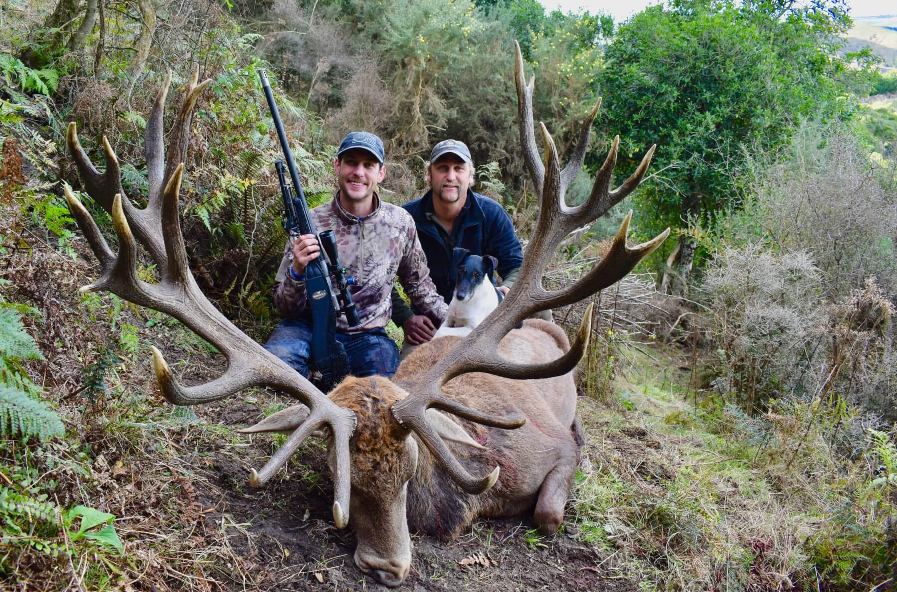 421 inch Red Stag
