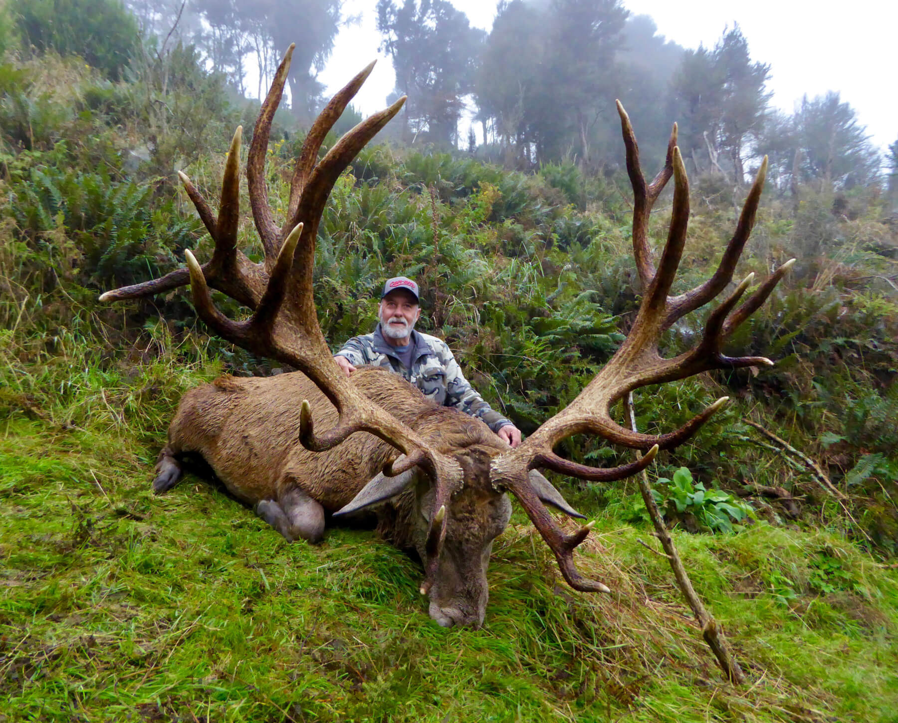 440 inch Red Stag