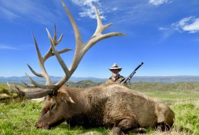 448 typical elk new zealand
