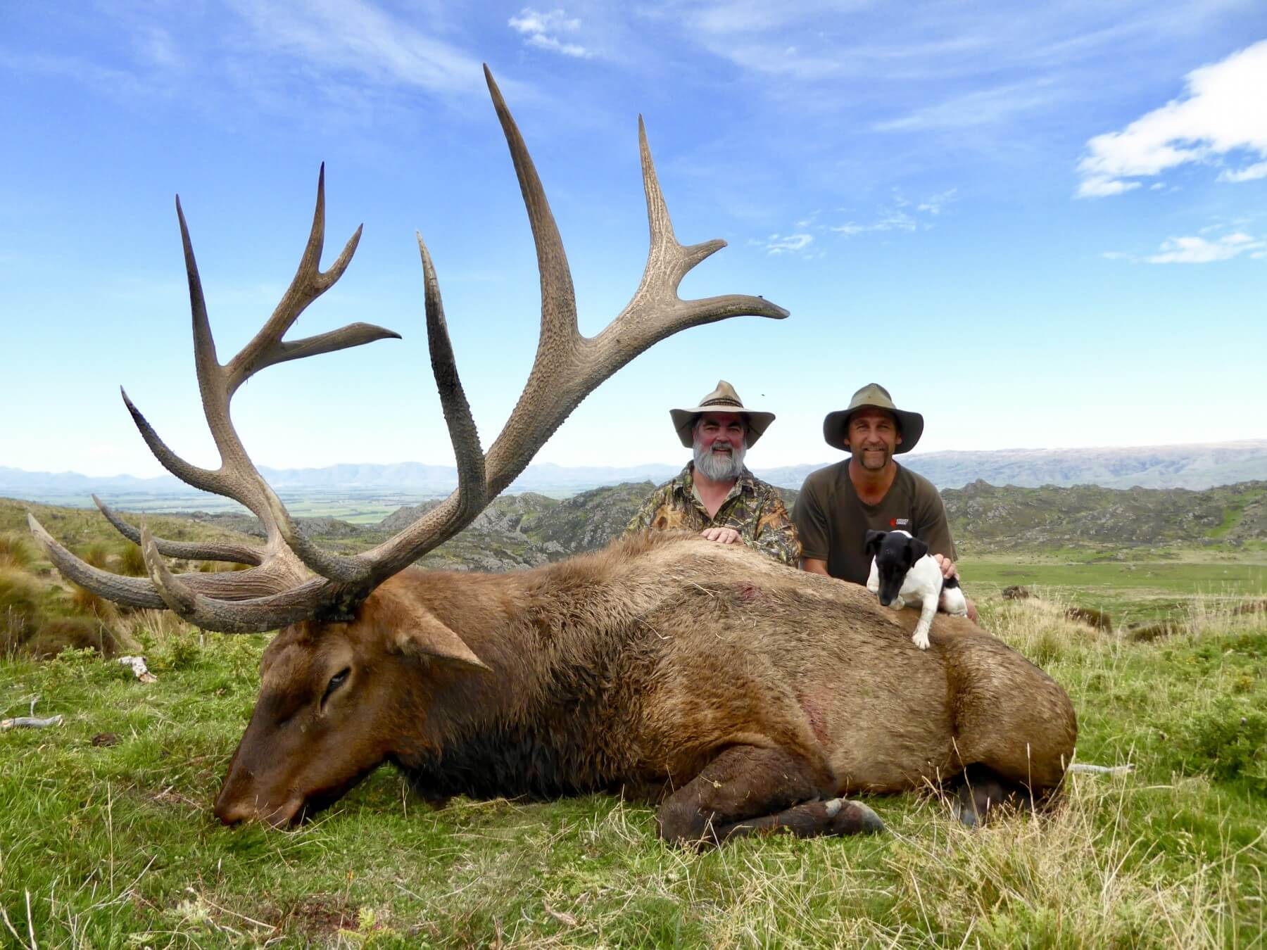 478 inch typical New Zealand elk hunting trophy