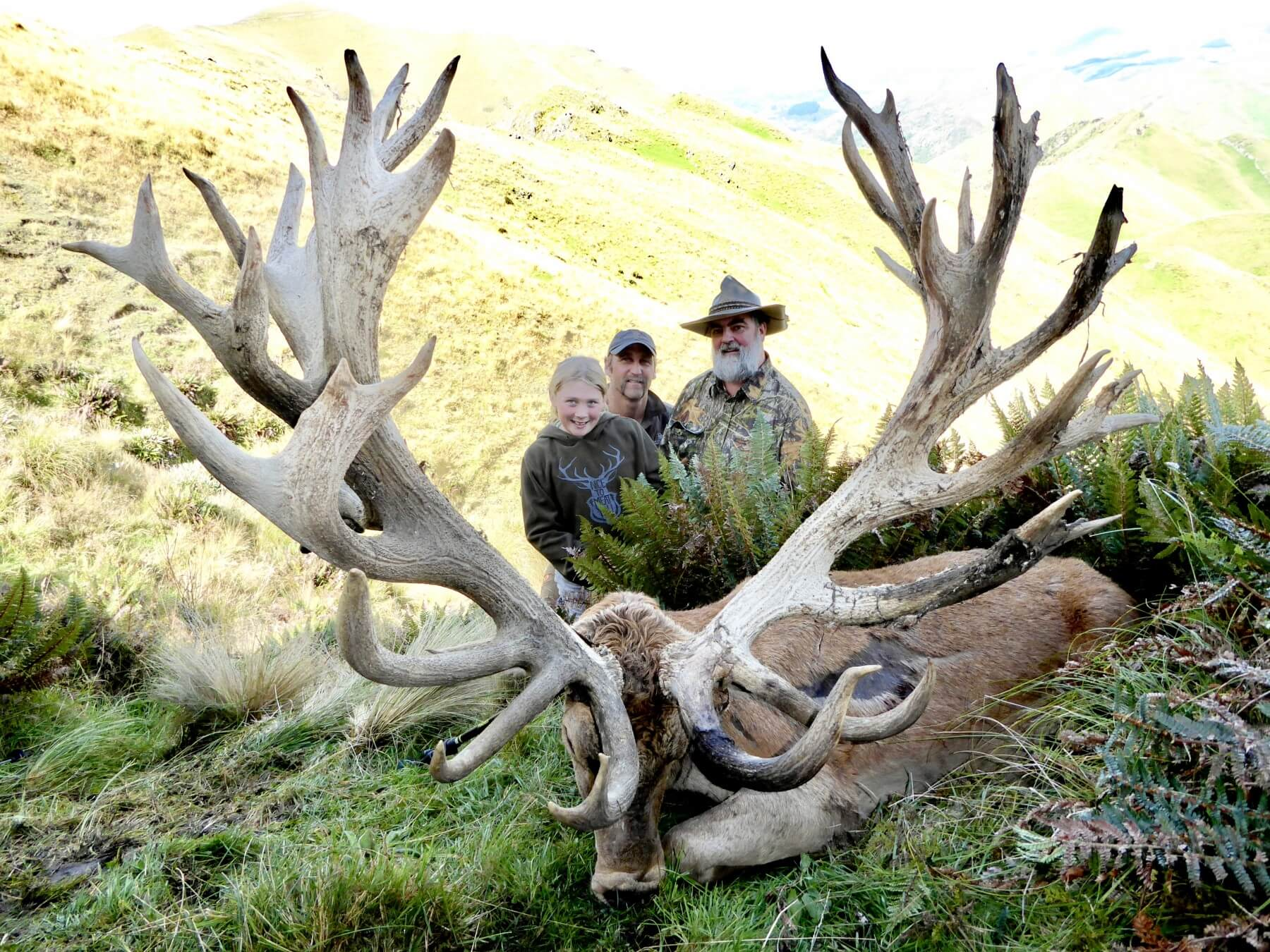 new zealand red stag 608 Inches