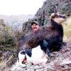 Alpine Hunting New Zealand
