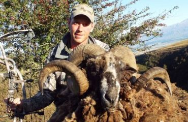New Zealand Safaris Arapawa Sheep Bow Hunting Trophy