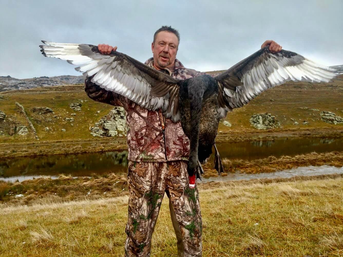 Bird shooting- Black Swan NZ