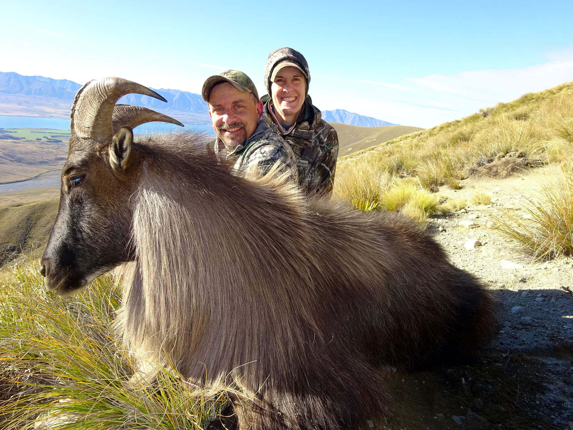 Bull Tahr on cliff new zealand