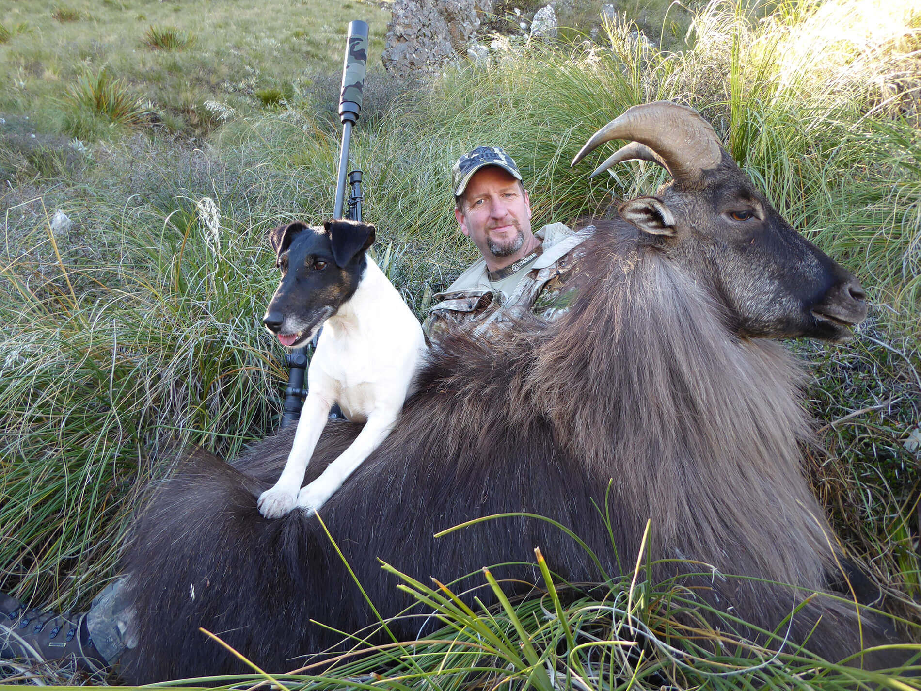 Bull Tahr with hunter and dog New Zealand