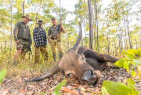 trophy banteng hunting australia
