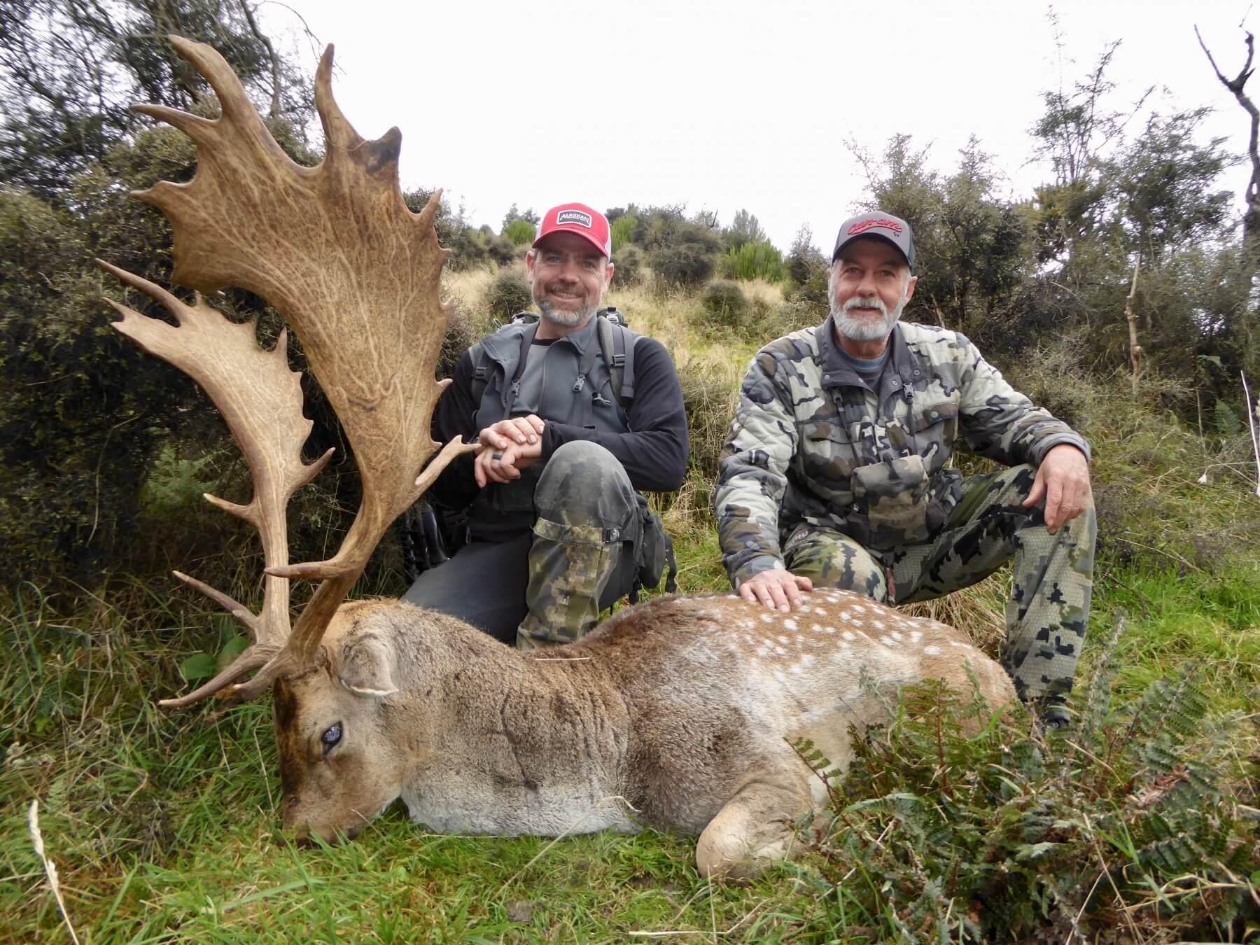 Fallow Buck New Zealand