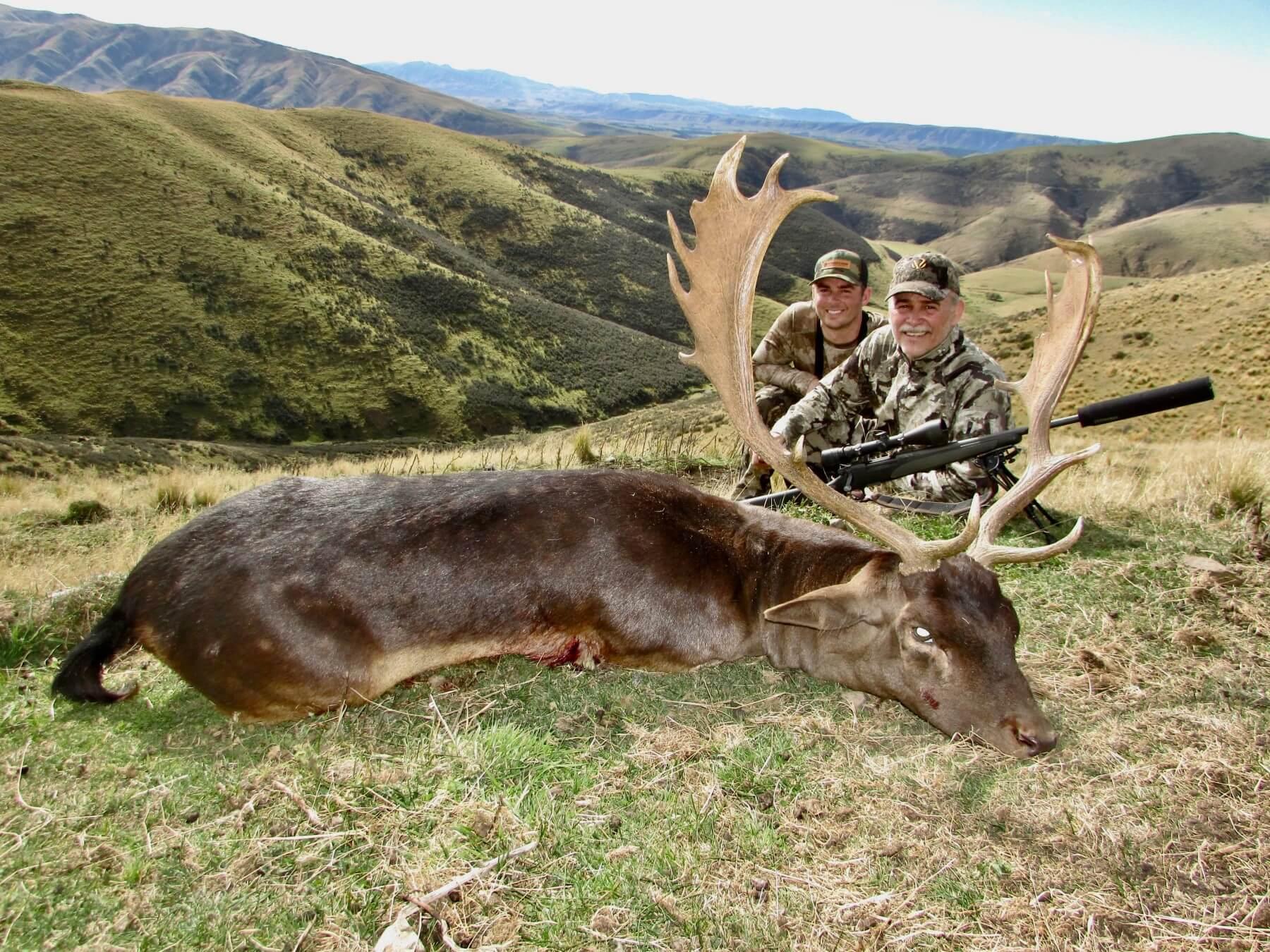 Fallow Buck free range
