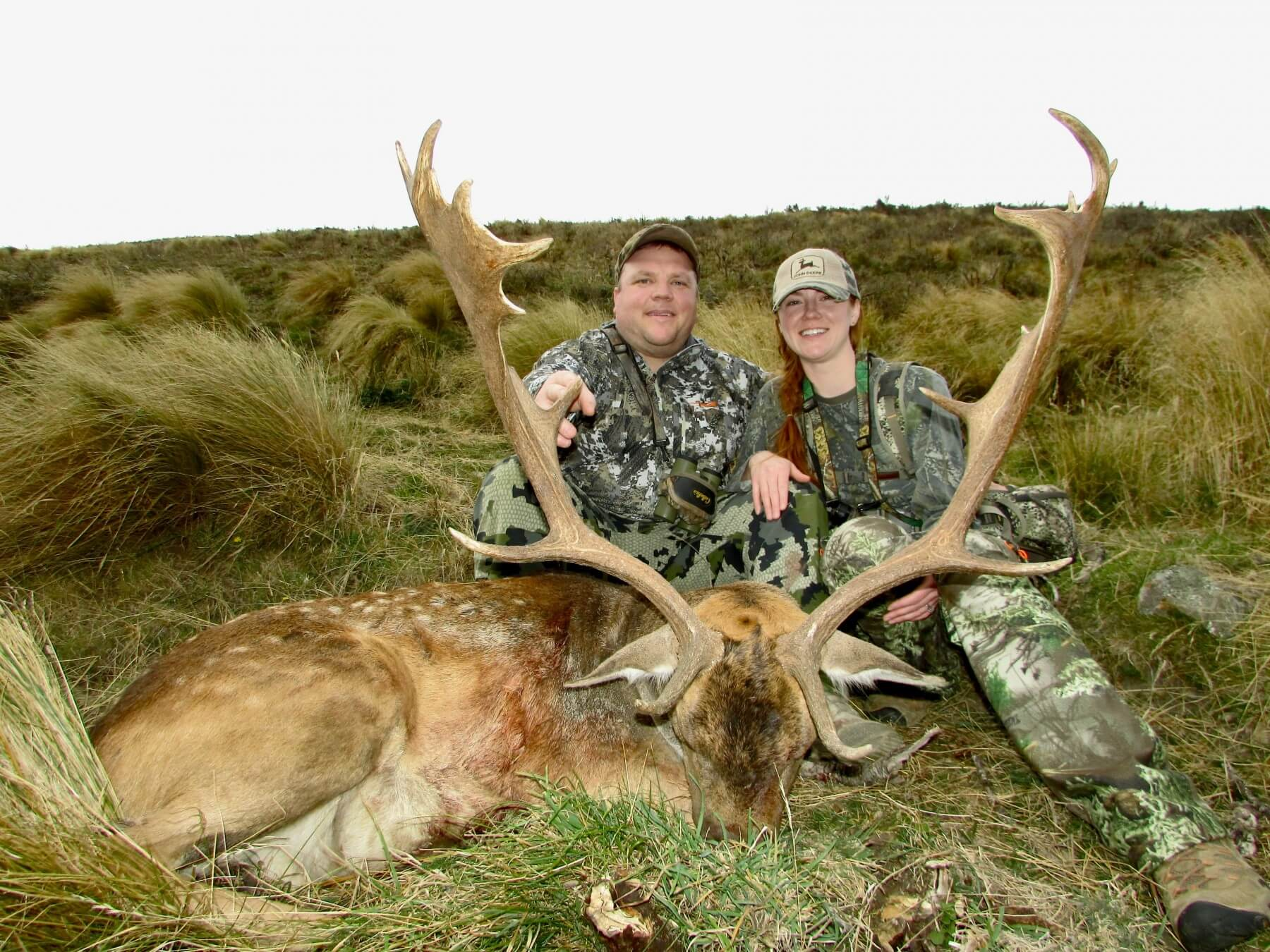Fallow Buck wild free range