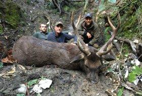 Free range Sambar deer New Zealand