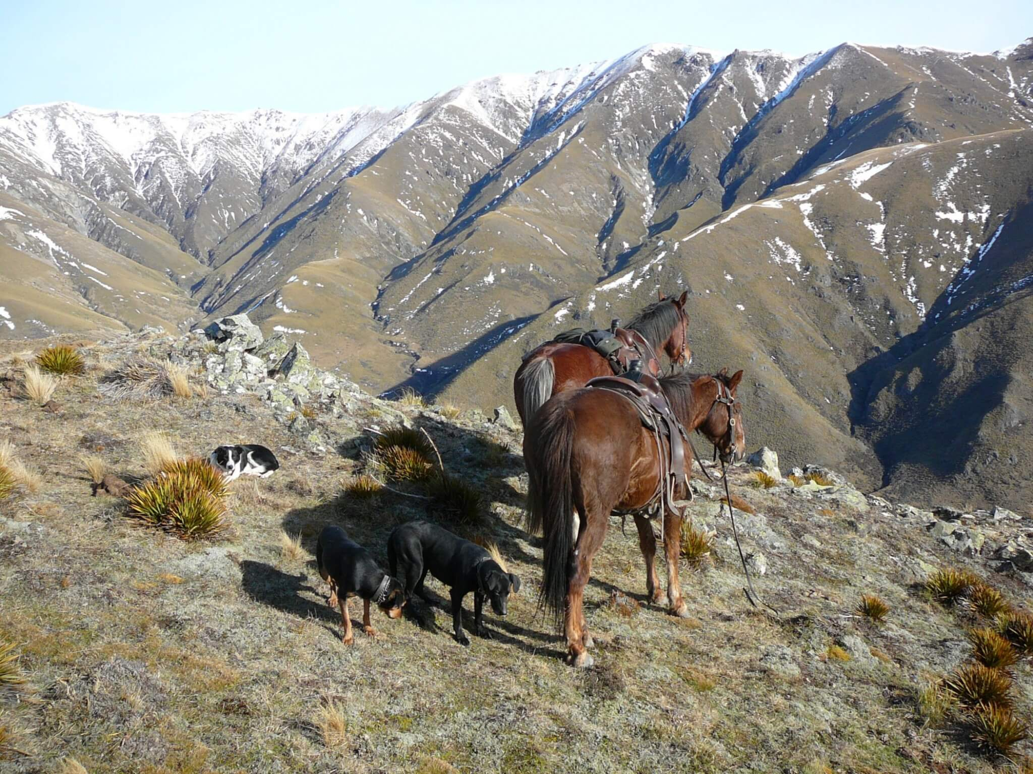 New Zealand hunting with horses
