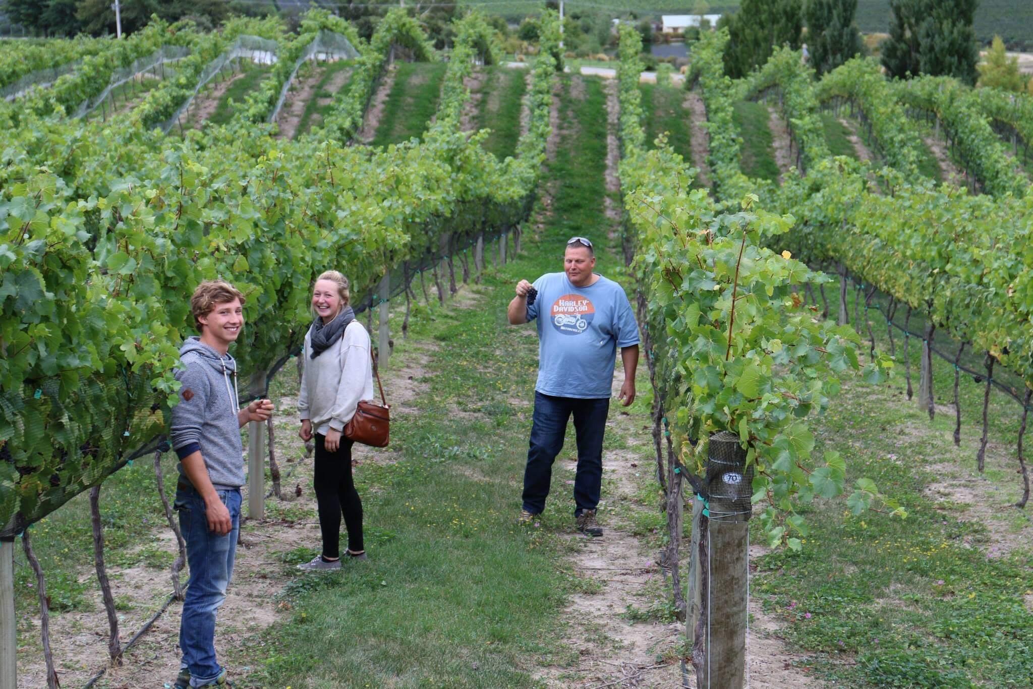 vineyards new zealand