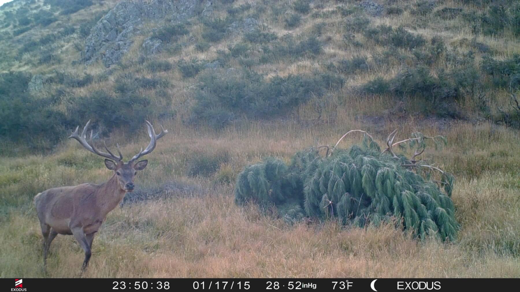 trail camera new zealand