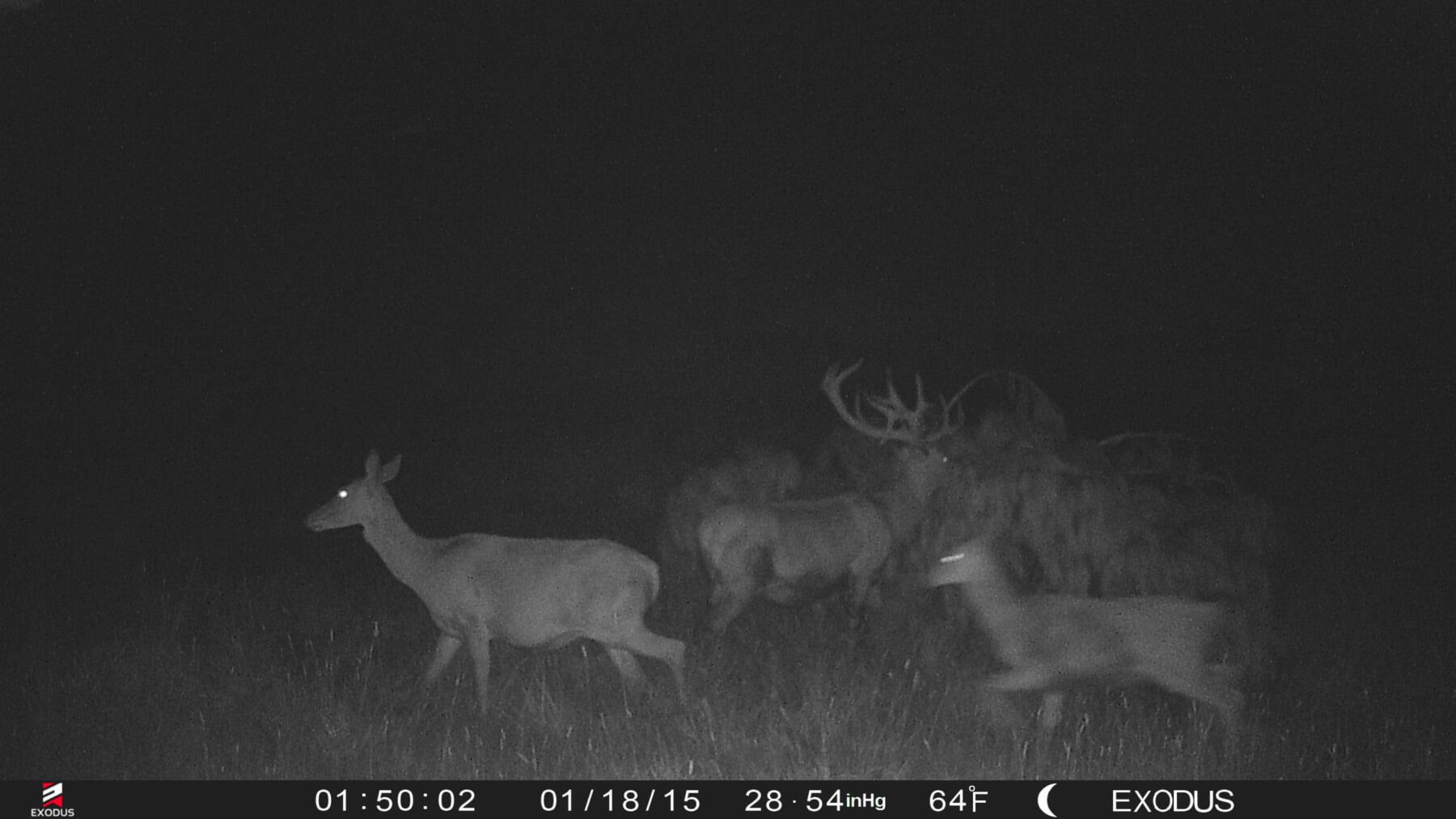 trail cam stags nz