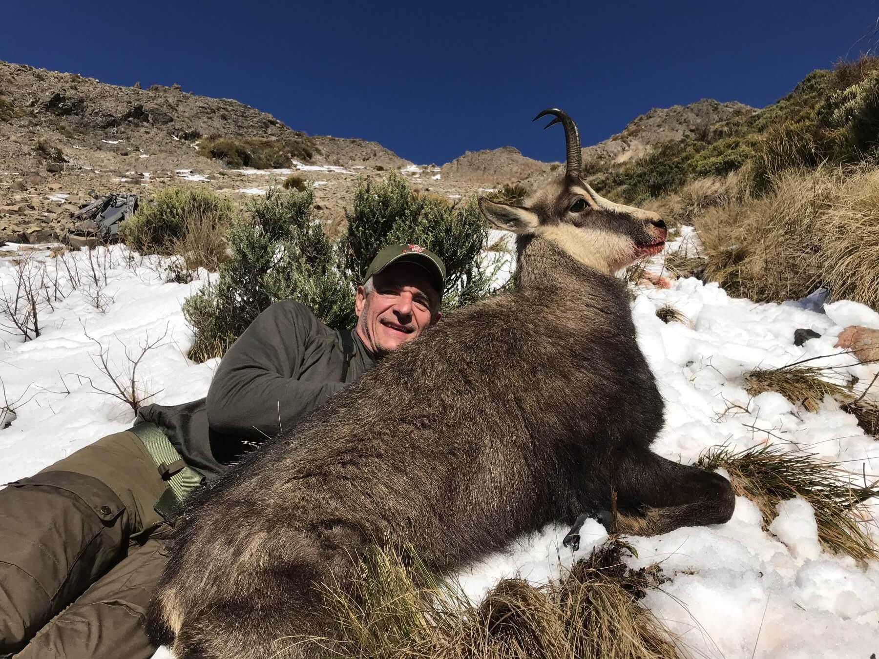 NZ Mountain Antelope-Chamois
