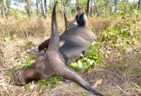 Banteng Hunting Australia