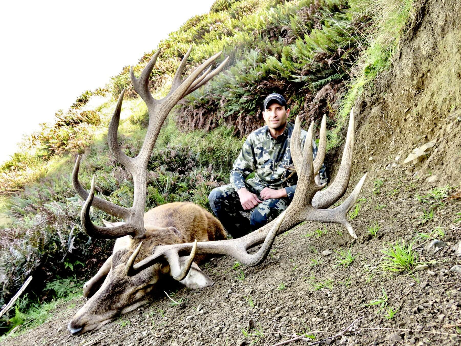 Red Stag 375 inches photo