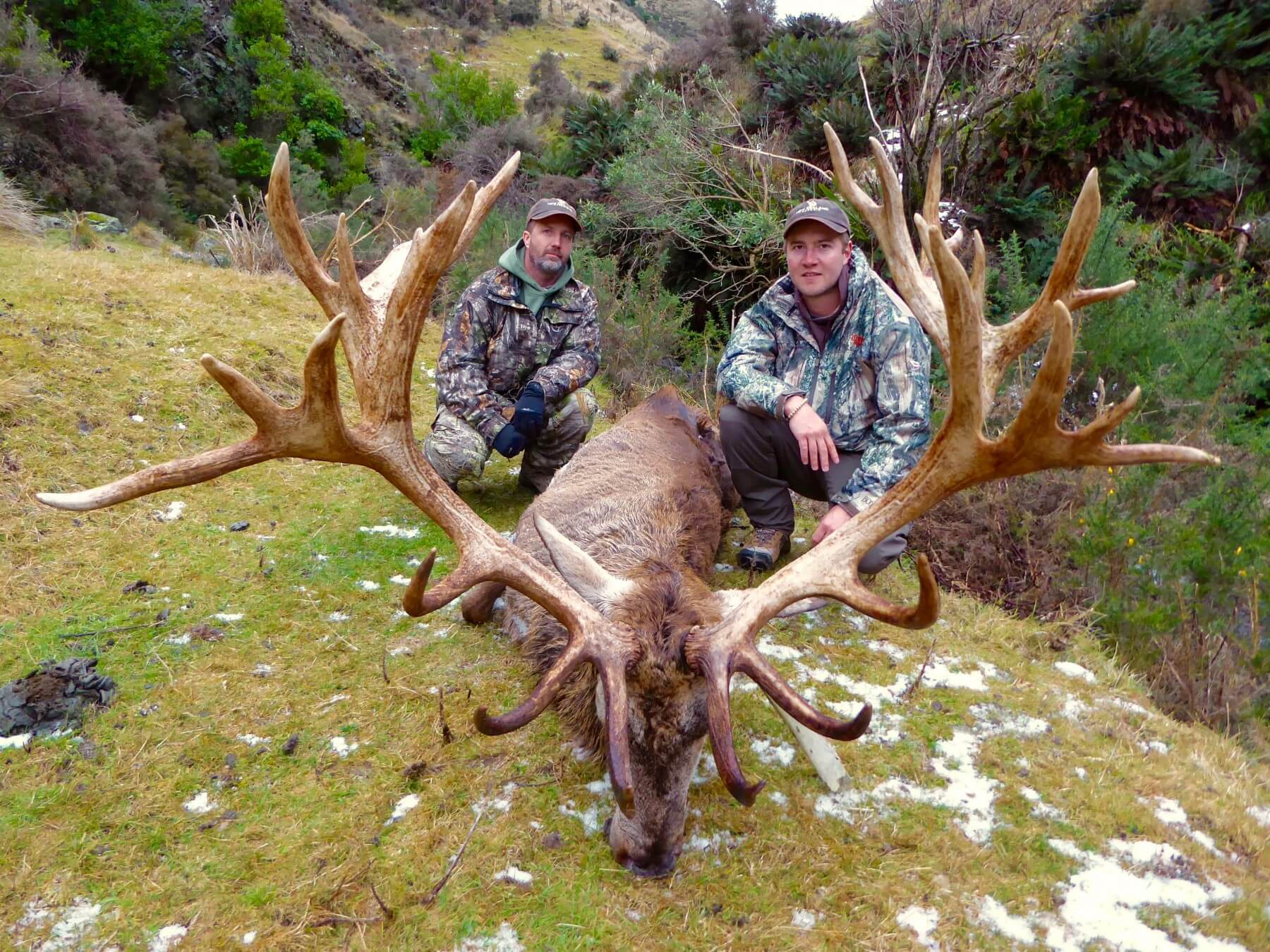 Red Stag 430 inches