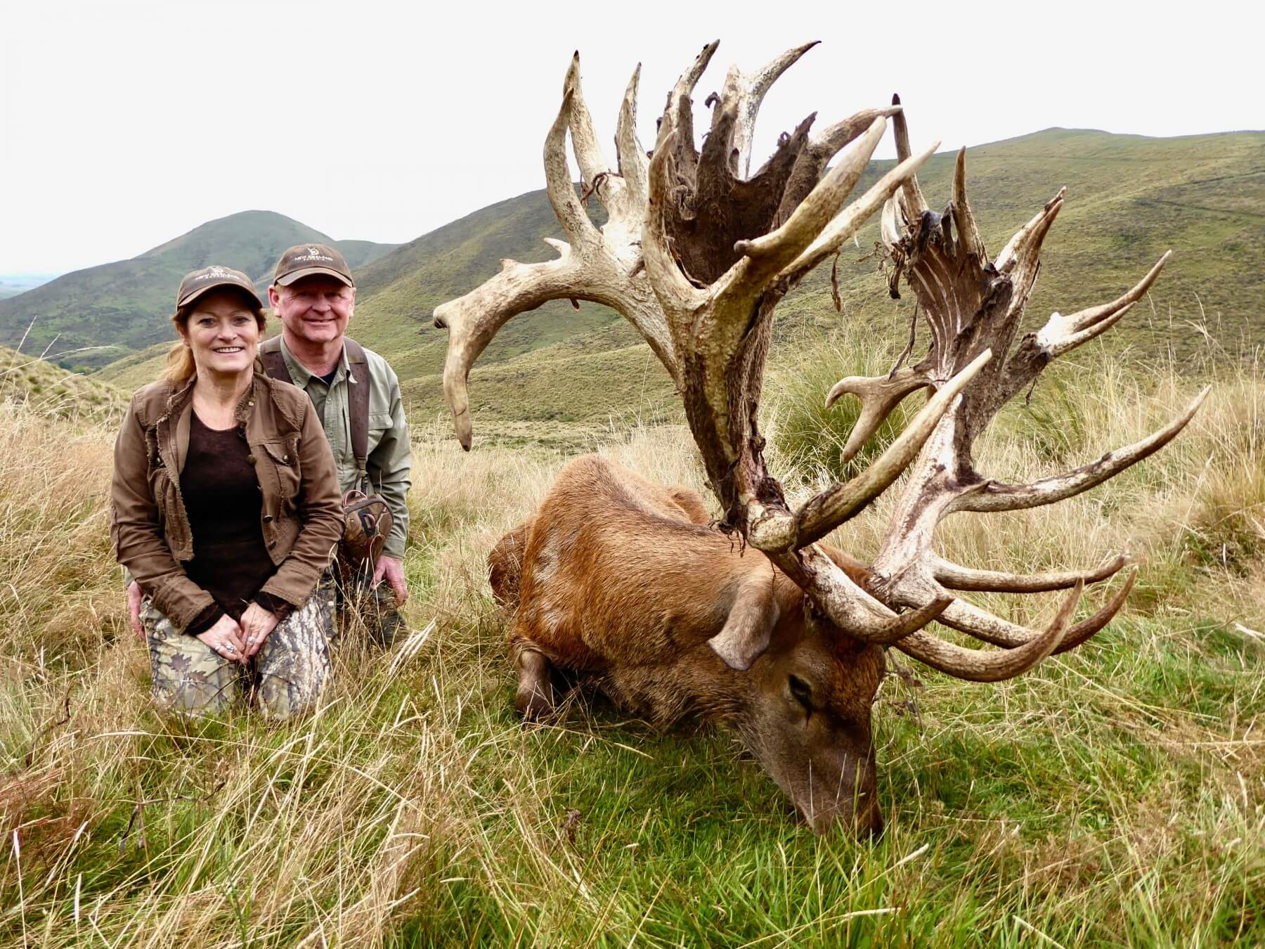 New Zealand Red Stag hunting trophy 550 inches