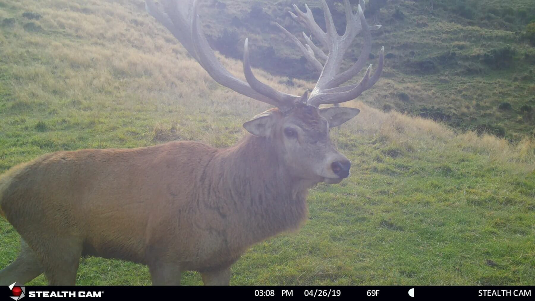 stag game camera