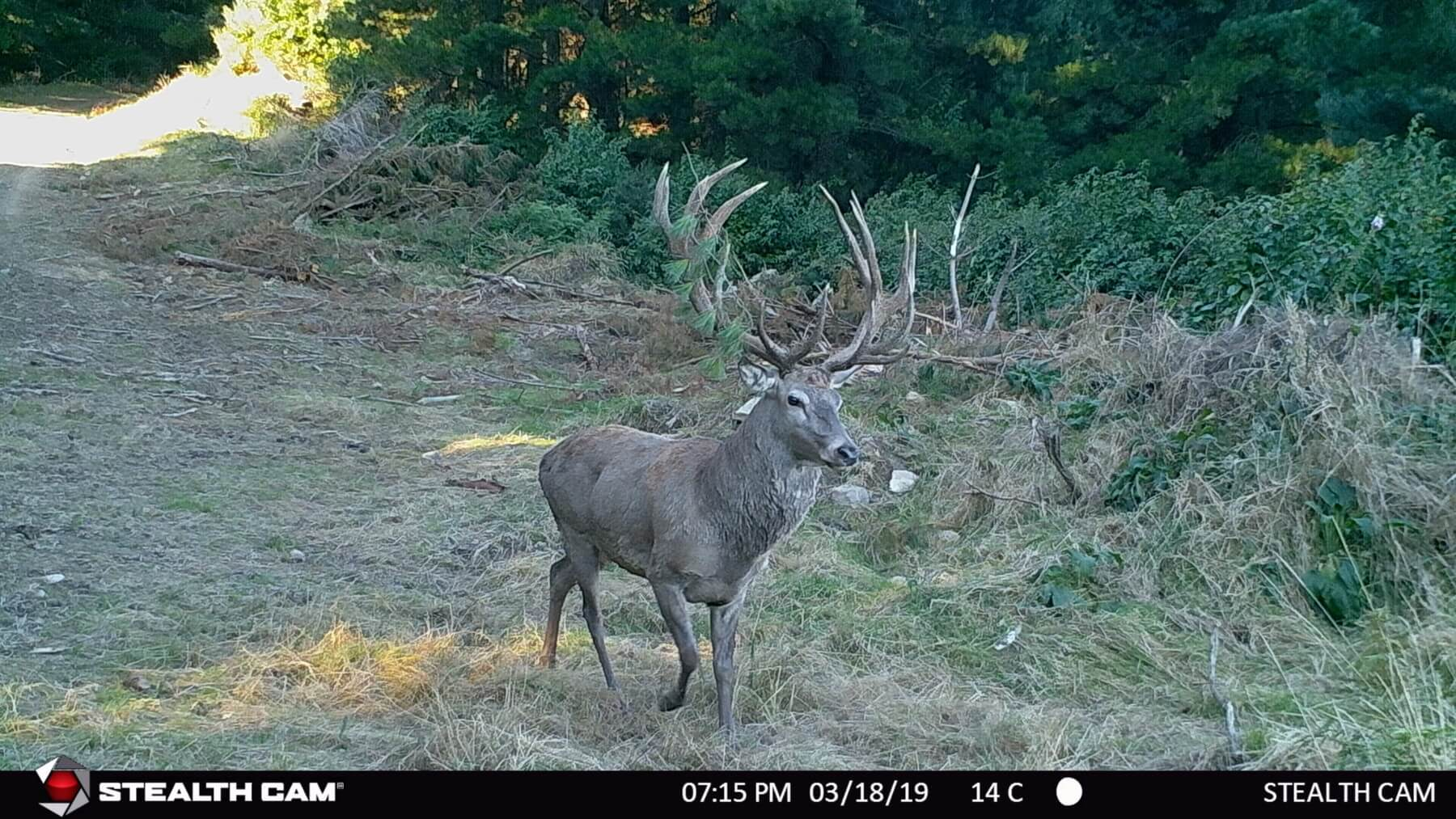 red stag trail camera