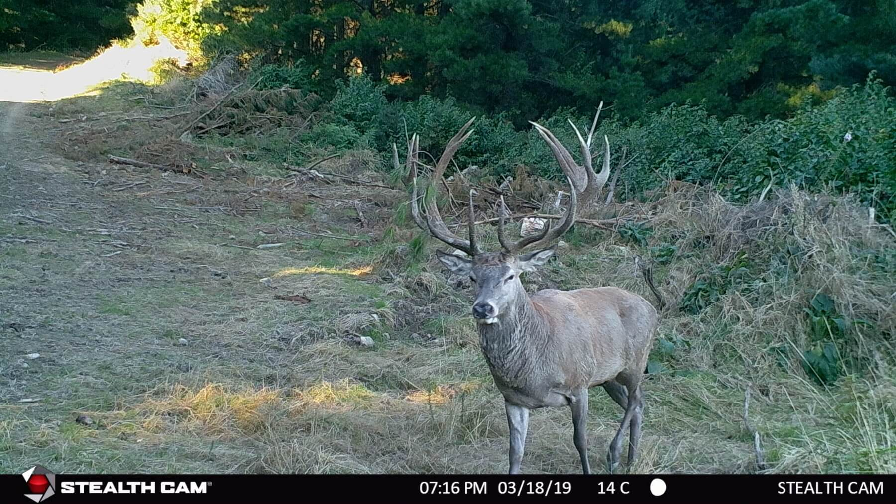 red stag trail cam