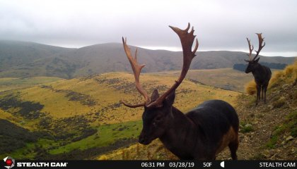 Trail Cam New Zealand