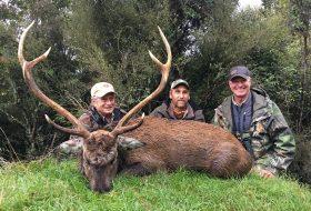 sambar deer trophy with hunters