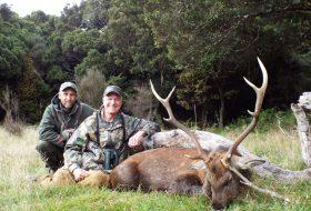 new zealand sika deer hunting trophy