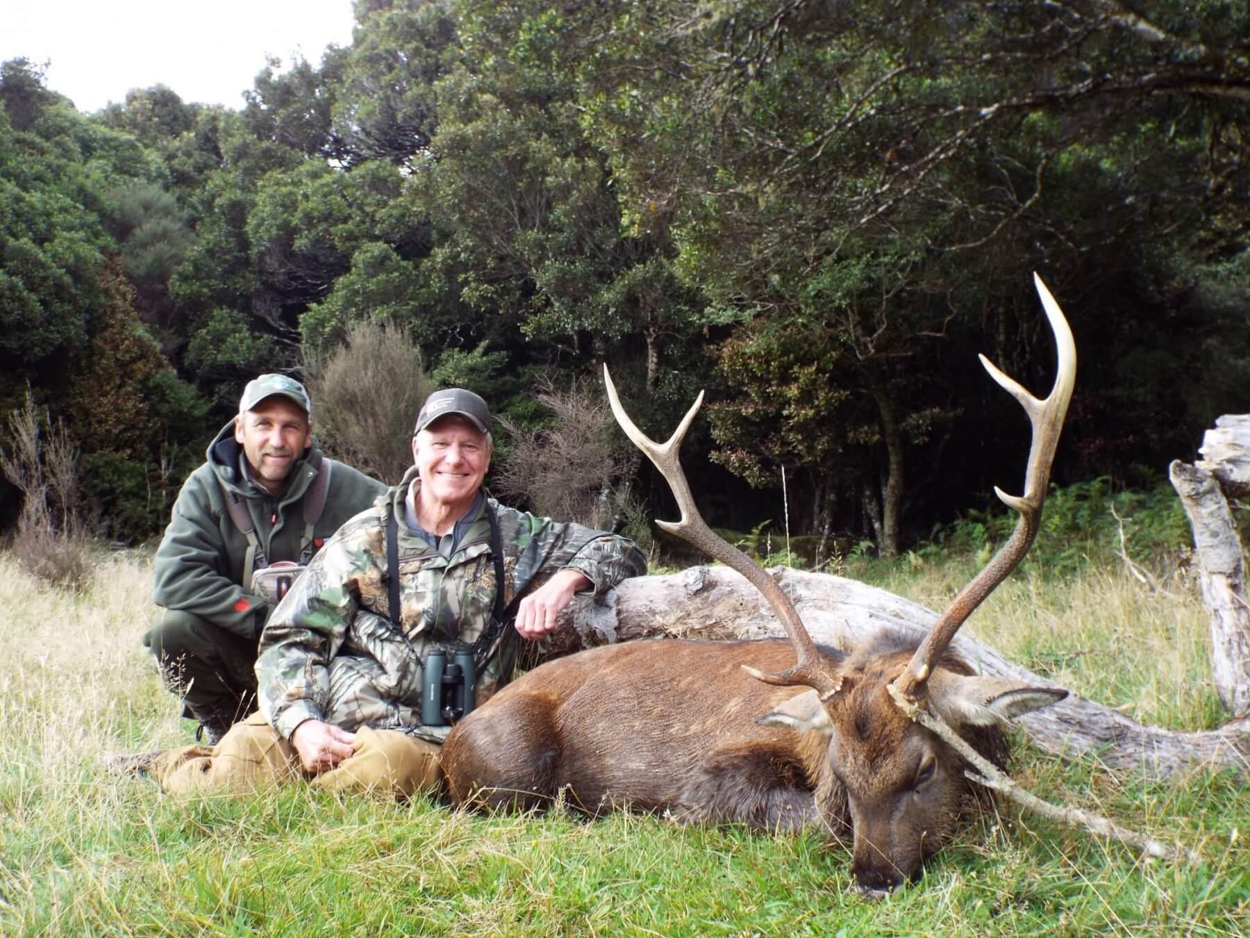 Sika Deer 183 New Zealand Safaris