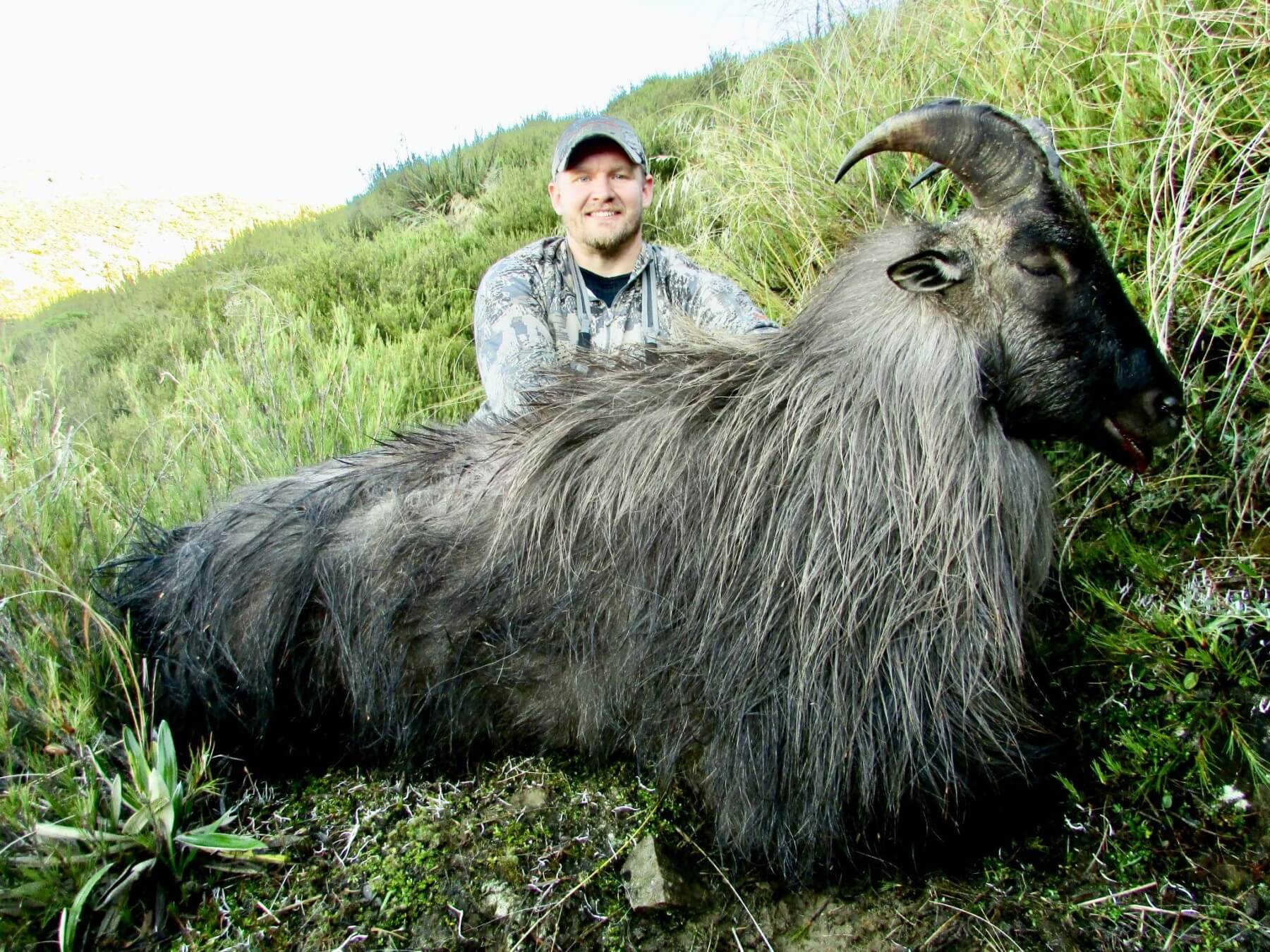 Tahr 6 year old 12.5 inches