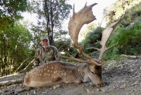 Trophy Fallow Deer ~ 264