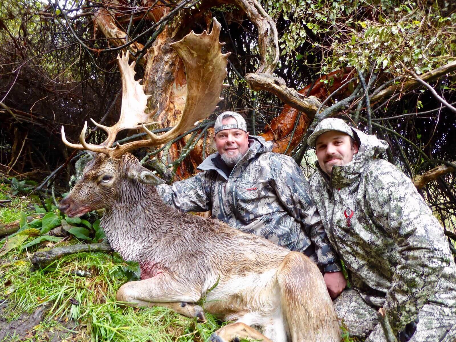 fallow buck hunting trophy