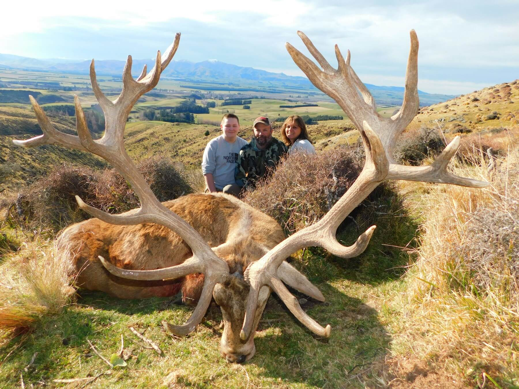 Trophy Red Stag 378 inches