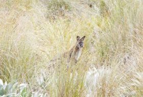 Wallaby Safaris New Zealand
