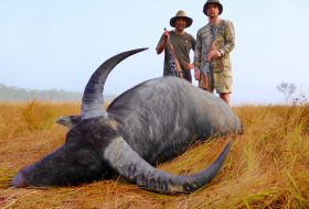 water buffalo trophy with hunters