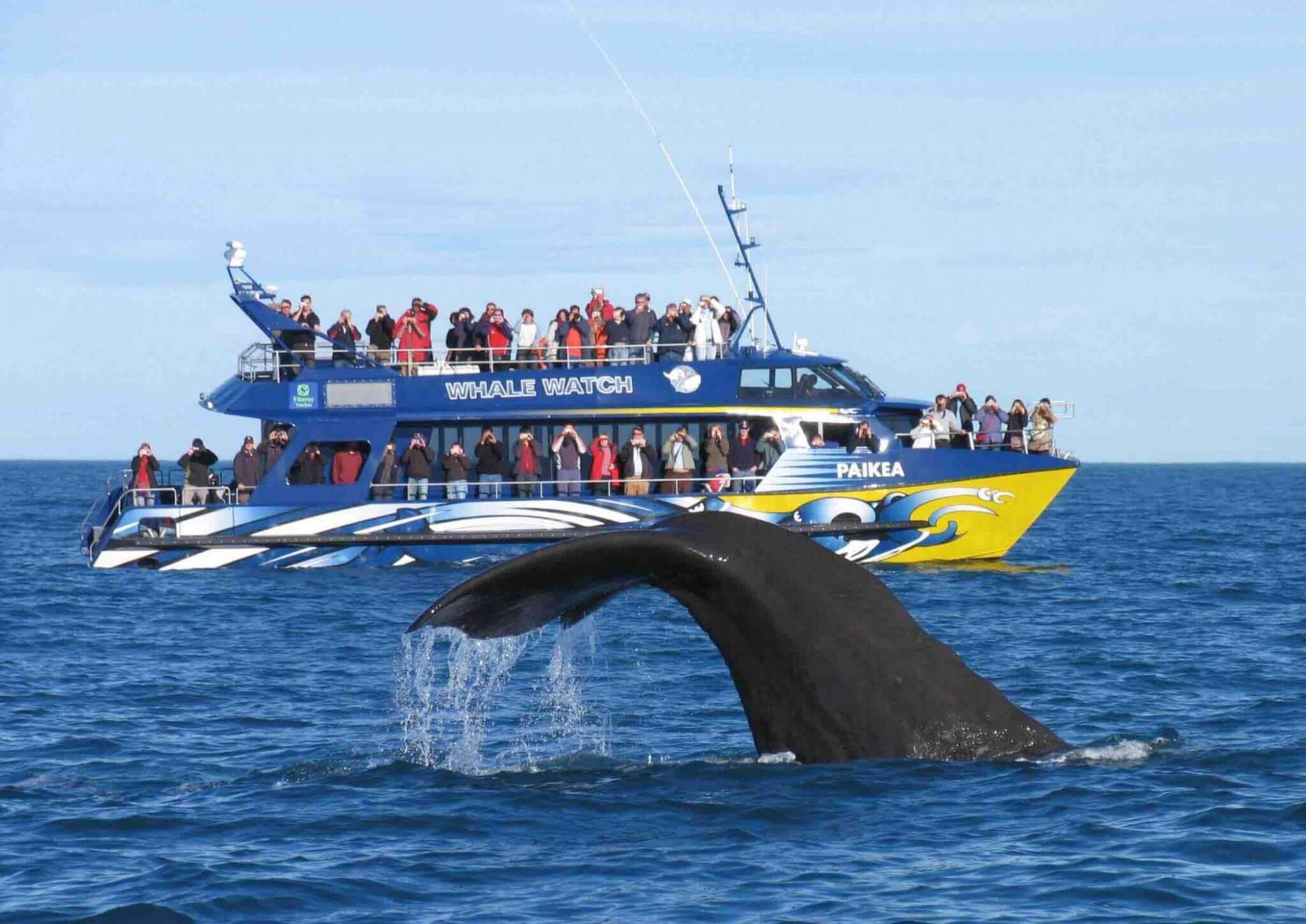 Whale Watch New Zealand