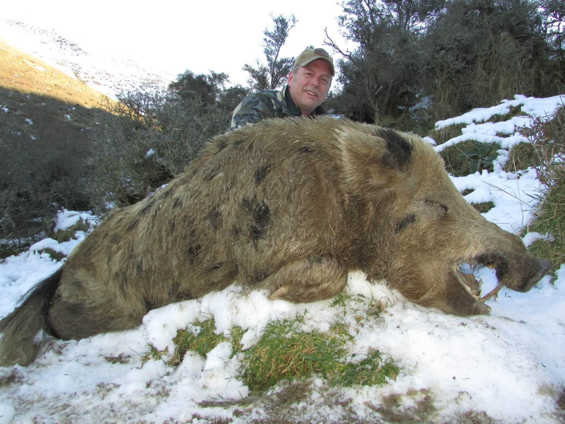 Wild Boar New Zealand