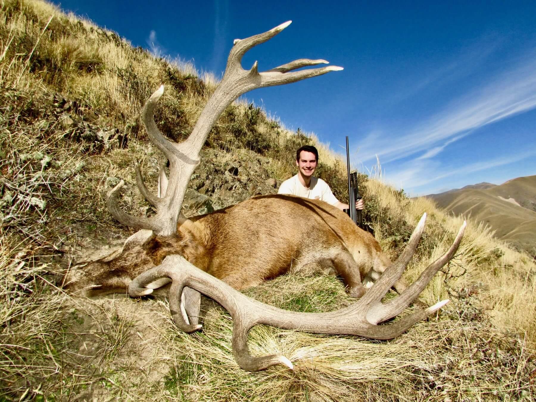 Wild Free range Red Stag