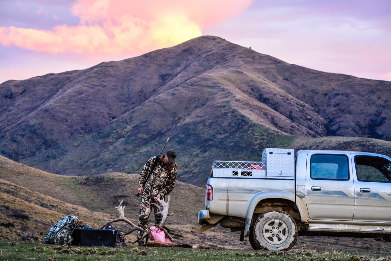 new zealand animals to hunt new zealand safaris hunting articles