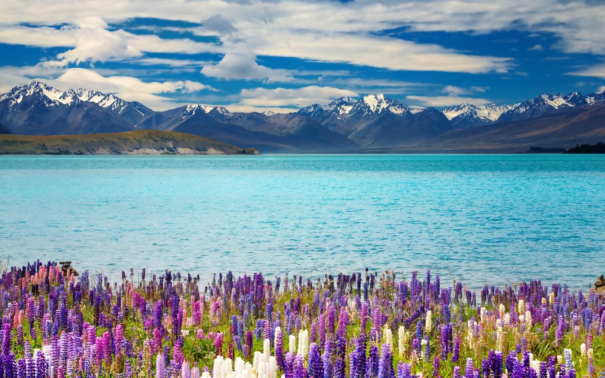 new-zealand-lake-tekapo_with flowers