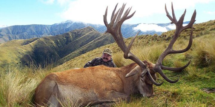 New Zealand Red Stag Hunting Trophy
