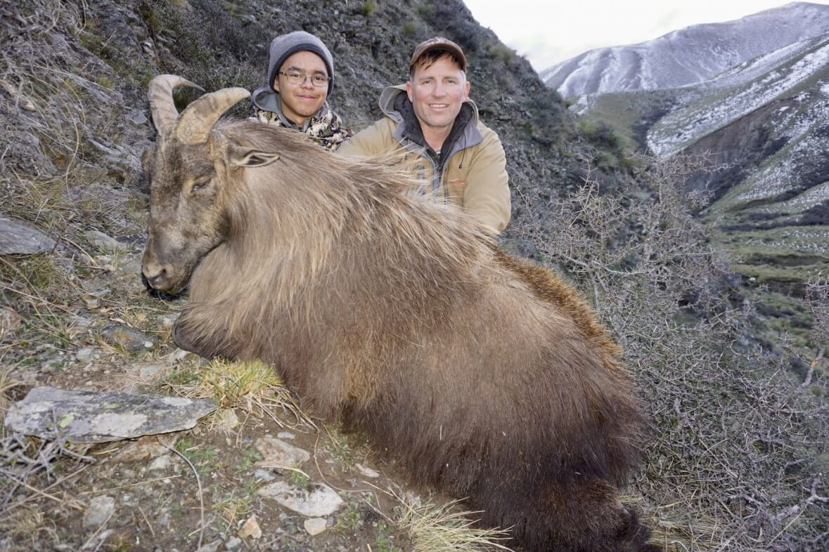 New Zealand Tahr Hunting Trophy